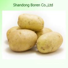 Servez-vous de la meilleure pomme de terre de qualité en Chine