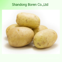 10 Kgs to 20 Kgs Per Mesh Bag Yellow Potato