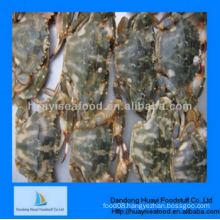 IQF frozen new yummy mud crab with with wholesale supplier