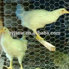 Grillage de poulet Philippines