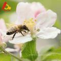 Raw polyflower honey on face