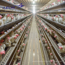 Leon series pullet cage layer cage in Kenya