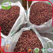 Especias y hierbas de Hua Jiao Pimienta roja de Sichuan