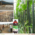 Organic Matter-Decomposing Inoculant