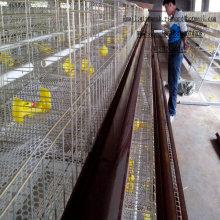 Pollos de engorde Huevos Capa de aves de corral Ganadería Ganadería Industria Ganadería