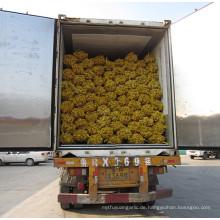 Ingwer Exporteure China / kaufen chinesischen Ingwer