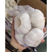 2020 New Crop Coldroom Weißer Knoblauch
