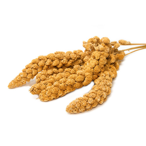 Nature Wholesale cheap price Yellow Hulled Millet
