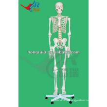 Modelo de esqueleto humano 180cm ossos de esqueleto humano