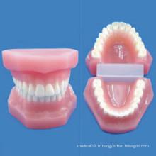 Modèle de soins infirmiers anatomiques dentaires de taille naturelle humaine (R080111)