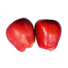 High quality good delicious huaniu apple to india