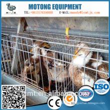 Les fabricants chinois produisent des équipements d'élevage de canards personnalisés