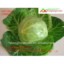 pickled cabbage price 2011