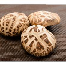 5.5cm up Dried Shiitake Mushroom, Dehydrated White Flower Mushroom