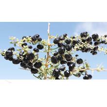 Northwest Chinese Dry Blackberry
