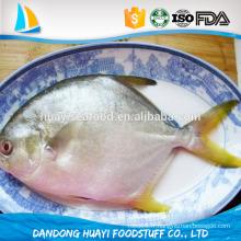Fournisseur de poisson pompano congelé IQF de fruits de mer