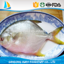 good price high quality frozen whole pomfret at low price