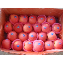 Well Selling Red Frische FUJI Apple