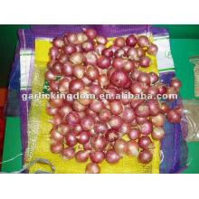 export shallot from china