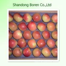 Frische Frucht Rot Dilicious Königliche Apfel Gala Großhandel