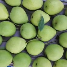 Nueva cosecha de pera fresca de Shandong