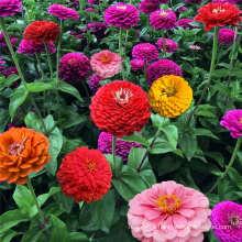Factory Price Wild Flower Seed Paper Edible Flower Seed