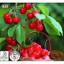 Health and Nutritious Acerola Cherry Extract Vitamin C 17%, 25%.