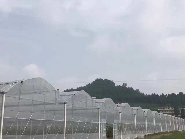 SK-multi span film greenhouse