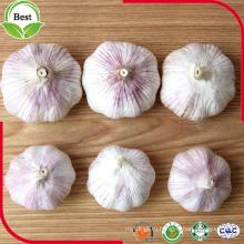 Хорошая цена Нормальный белый чеснок 4.5-5.0 5.0-5.5 5.5-6.0cm