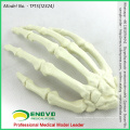 WHOLESALE SIMULATION BONE 12324 Medical Artificial Hand Bone Model , Orthopaedics Practice Simulation Bone