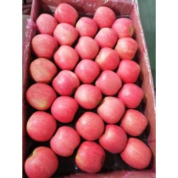 Pink Lady Apple de alta calidad