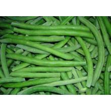 IQF Green Bean Ganze Auswahl Qualität