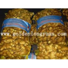 Gingembre frais emballé dans un sac de maille de 20kg pour le marché du Bangladesh
