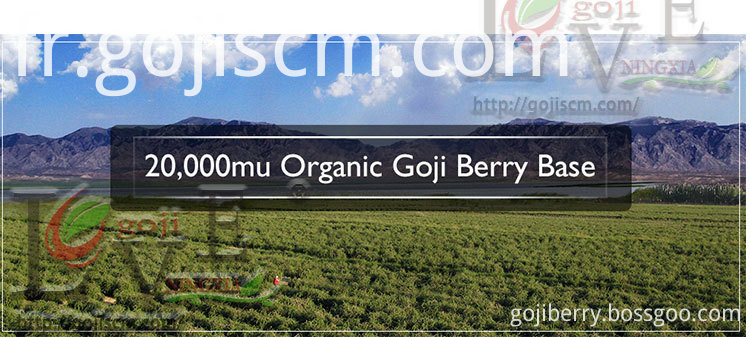 Hypotensive Goji Berry base