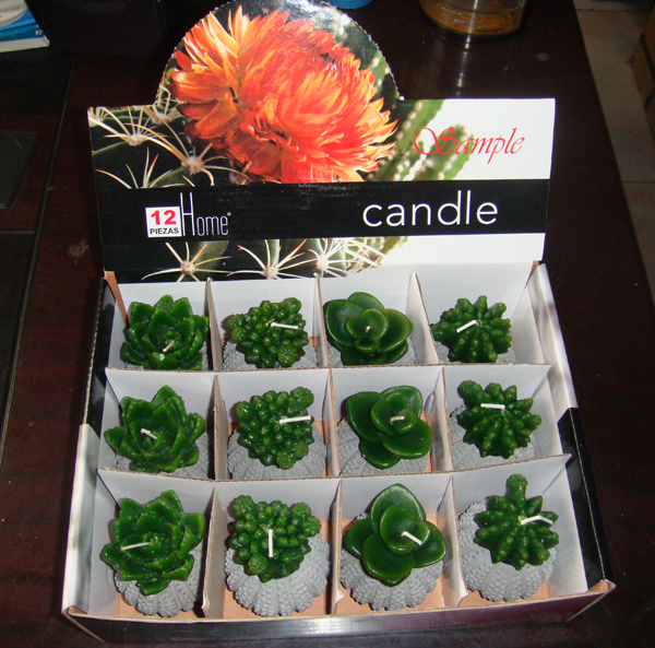 Aloe cactus plant flower craft candle