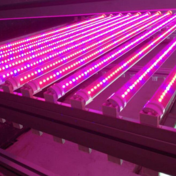 Plantas LED de 120 CM crescem luz T8tube grow light