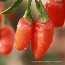 Baya orgánica de alta calidad de Goji de Ningxia