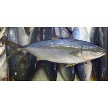 замороженная рыба с желтым хвостом для продажи