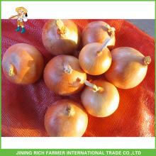 Classifique uma Cebola Fresca Colheita Cebola Amarela