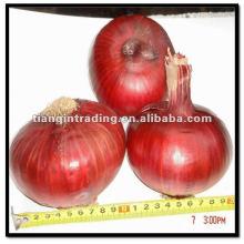 Frischgemüse-rote Zwiebel