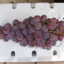 Fournisseur chinois de raisin frais frais doux