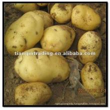 frozen fresh potato