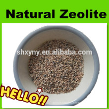 Activated zeolite filter media for water treatment
