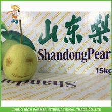 Pera de Shandong fresca china de calidad superior