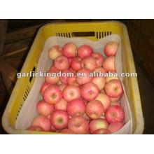 138-198 18kg best yantai Fuji Apple