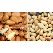 2017 gansu pine nuts white pine nuts