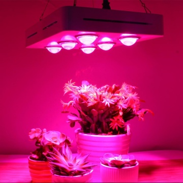 COB LED Grow Light Spectrum total para interiores