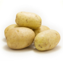 Fresh Yellow Potato From Boren