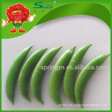 Guisantes chinos de guisantes verdes vegetales orgánicos que contienen vitamina d