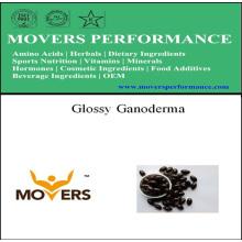 Source végétale Glossy Ganoderma Softgel